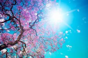 Cielo a primavera in Calabria